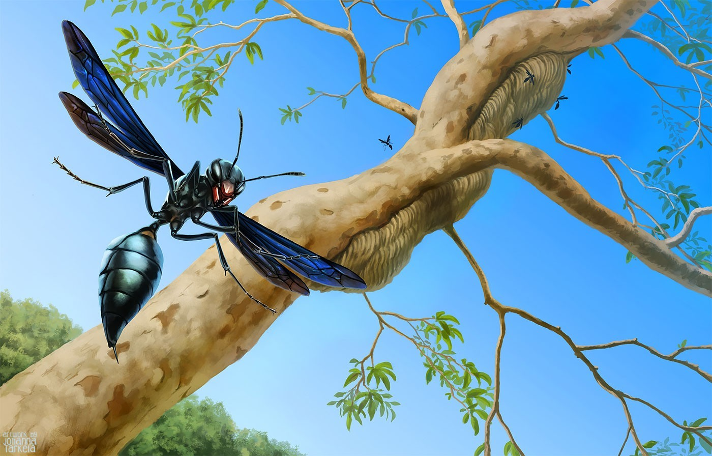 WarriorWasp_BG